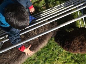 chasse aux oeufs paques ferme pédagogique